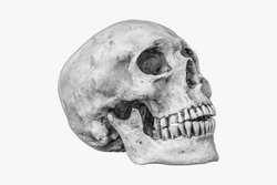 Side view of human skull on isolated with