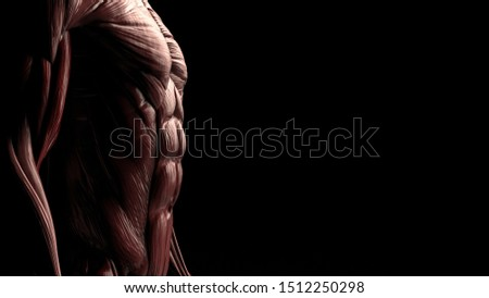 Side view of male lower body chest and abs muscles 3d render