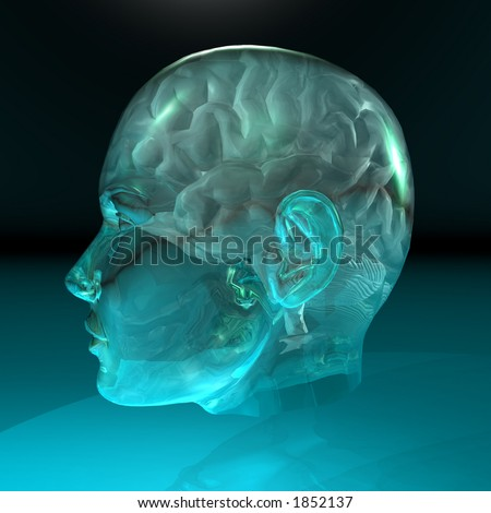 Side-view of the brain