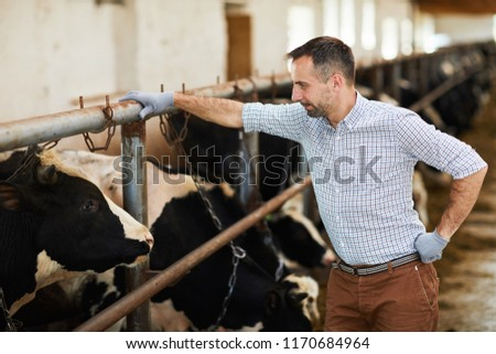 Side view portrait of handsome modern farm worker leaning on stall and looking at cows in barn, copy space