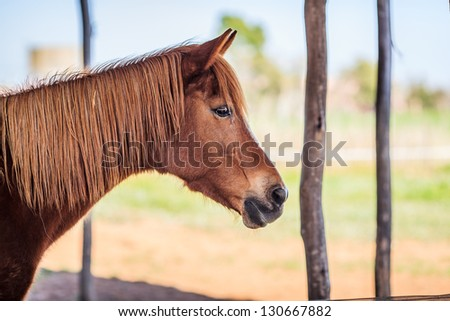 Side-view up of brown female horse