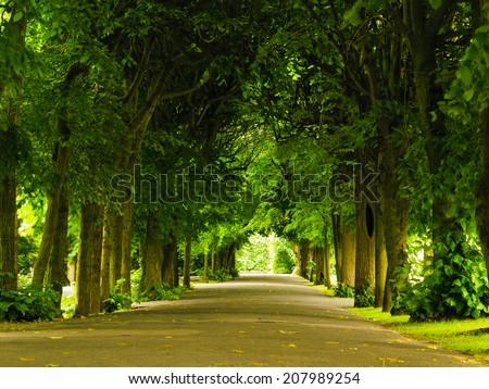 sidewalk walking pavement alley path with trees in park. nature landscape. summer walk.