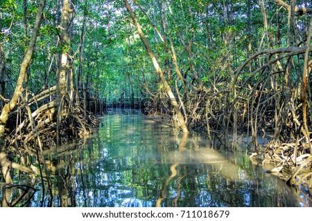 Sierpe river mangrove Costa Rica  Zdjęcia stock ©