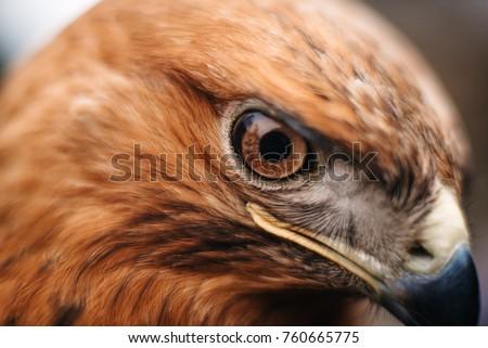 Sight Bird