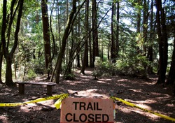 Sign posted in Muir Woods National Monument at trail head announcing that the trail is closed. Trail Closed, Warning, Do Not Enter, Caution Tape.