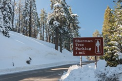 Sign to Sherman tree in Sequoia National Park. Winter landscape with snow and forest in Sequoia National Park, California, USA