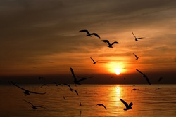 Sihouette seagulls over the ocean at sunset.
