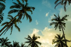 Siilhouettes of palm trees on the beautiful tropical sunset background.