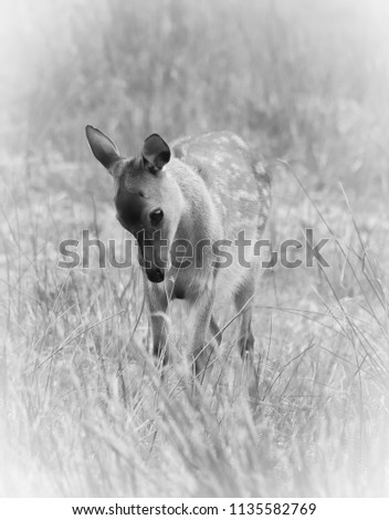 sika deer wildlife #1135582769