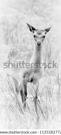 sika deer wildlife #1135582772