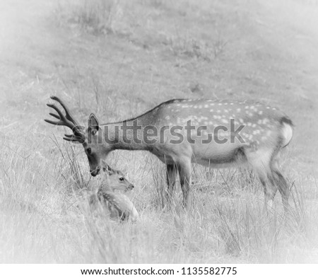 sika deer wildlife #1135582775