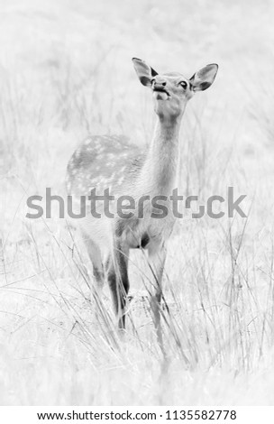 sika deer wildlife #1135582778