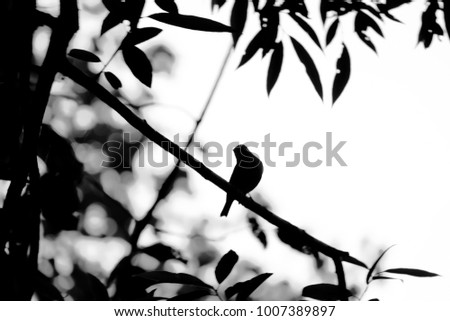Silhouette abstract lonely bird perched on tree branch. Dramatic black and white effect.