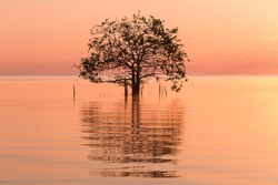 Silhouette and reflection of single lonely tree in the water at sunset.