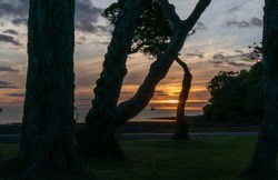 Silhouette and sunset at Mulberry Grove Beach on Great Barrier Island New Zealand.