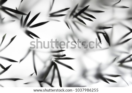 Silhouette bamboo leaves on bright light white background. Bamboo leaves shadow in studio light