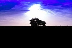 Silhouette big tree with sunset sky background