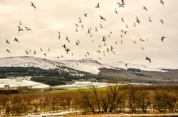 Silhouette Bird migration during winter time with  beautiful nature landscape of Scotland.