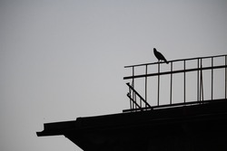 Silhouette bird on the black roof with copy space
