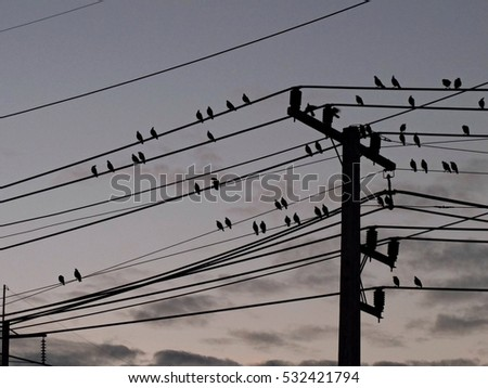 silhouette bird on the wire in morning dark sky background