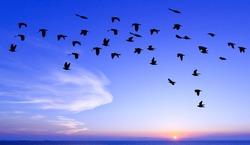 silhouette Birds at sunset