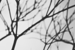 silhouette blur tree branches. black and white abstract photo.  background and texture.