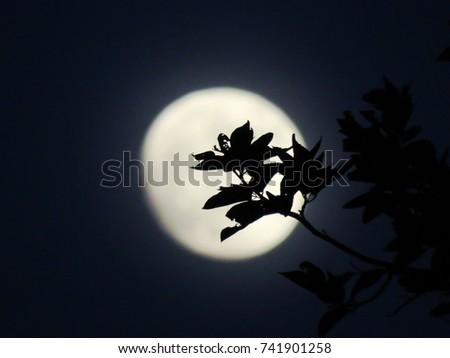 Silhouette Branch #741901258