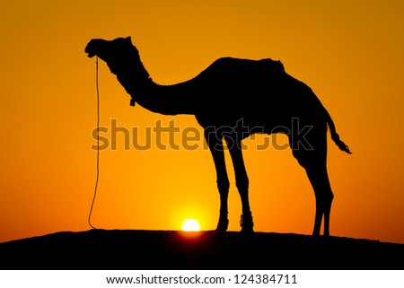 Silhouette camel at sunset on the dunes of the Thar desert. Jaisalmer, India.