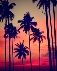 Silhouette Coconut Palm Tree Outdoors Concept