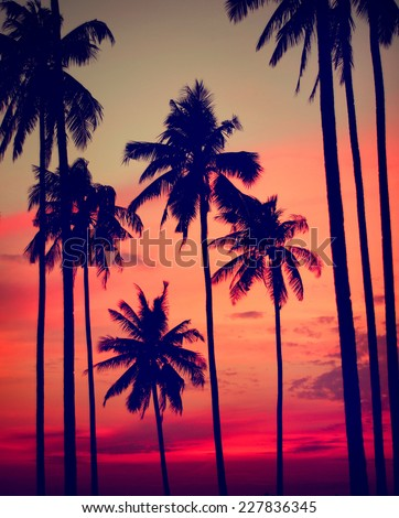 Silhouette Coconut Palm Tree Outdoors Concept #227836345