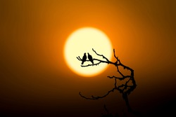 Silhouette couple of birds on tree branch when sunset representing love and romance.