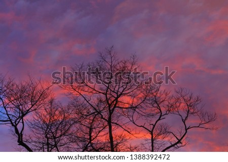 Silhouette dry branch tree at twilight, Beautiful background of twilight. #1388392472