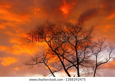 Silhouette dry branch tree at twilight, Beautiful background of twilight. #1388392475