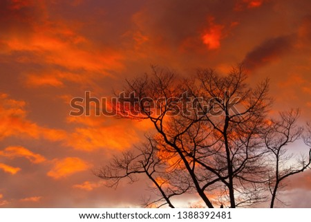 Silhouette dry branch tree at twilight, Beautiful background of twilight. #1388392481