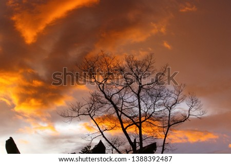 Silhouette dry branch tree at twilight, Beautiful background of twilight. #1388392487
