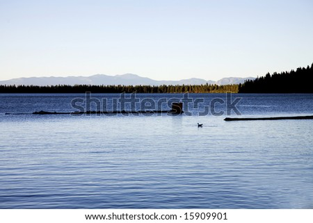 Silhouette Duck on Fallen Leaf Lake Near Lake Tahoe California at Sunset