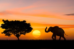 Silhouette elephant standing nearly big trees in safari with beautiful sunset twilight sky background