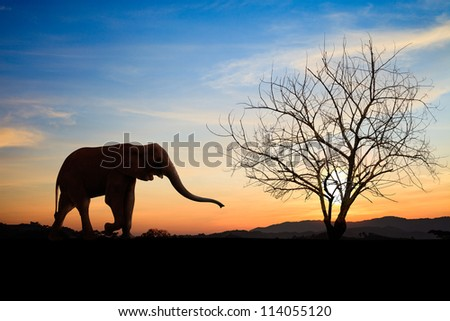Silhouette elephants over sunset
