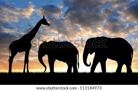 Silhouette elephants with giraffe in the sunset