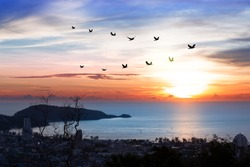 Silhouette flock of birds flying over patong coastal city with twilight sky  at sunset. Birds flying in v shaped.Autumn equinox day.