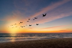 Silhouette flock of birds in v shaped flying over the sea at sunset.Birds flying in autumn equinox day. The freedom of birds,freedom concept.