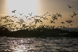 Silhouette flock of birds in v shaped flying over the sea at sunset. Birds flying in autumn equinox day. The freedom of birds, freedom concept.