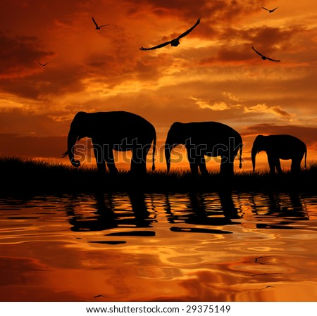 stock photo : silhouette herd of elephants at sunset