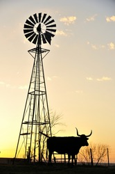 Silhouette image of Texas Longhorn and windmill in sunset