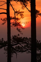 silhouette landscape pine tree with colorful sky and cloud with birds group