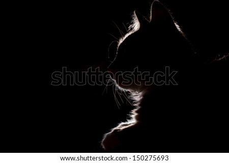 silhouette of a beautiful cat on a black background