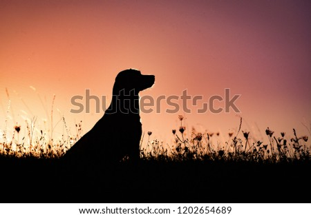 Silhouette of a beautiful labrador retriever gundog #1202654689