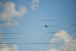 silhouette of a bird. black birds standing on an electric wire pole of an electric line under a light blue sky.simple background for the design. sounds like notes.