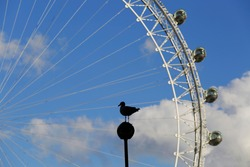Silhouette of a bird perched in a street light pole next to the river Thames and the London Eye, during a sunny summer day in London, United Kingdom.
