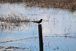 silhouette of a bird sitting on a fence pole with water behind it